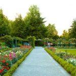 81595 Bern Rose Garden 3