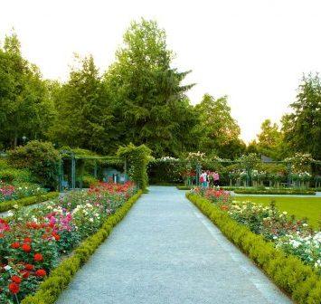 81595 Bern Rose Garden